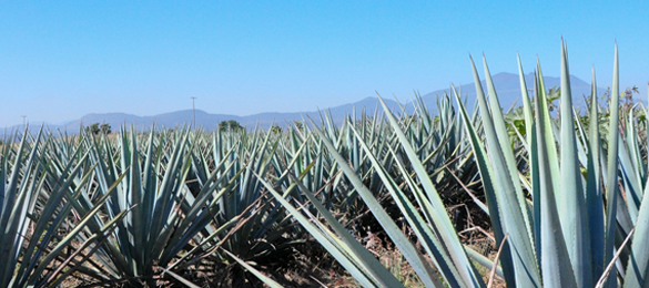 Tequila Fest Heads to Liverpool