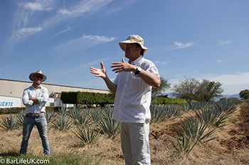 Ruben and a mini agave field